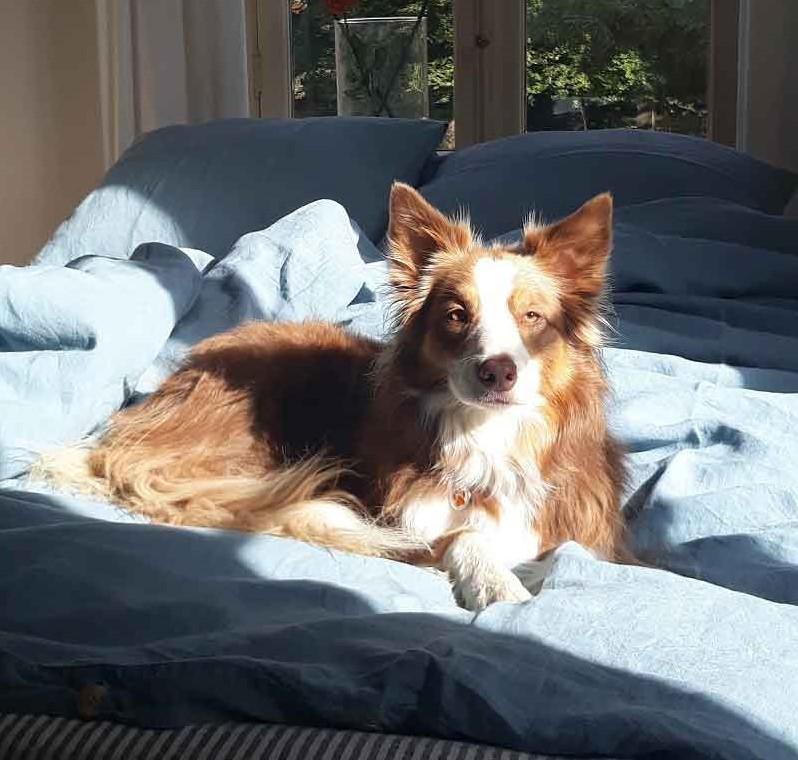 Foto shoot nieuwe collectie met company dog Lynn